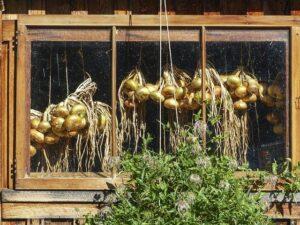 玉ねぎは吊るして保存する